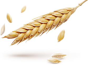 Скупка зерна